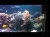 Два пяти метровых мягких рифа...