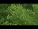 Озорной поцелуй ~Любовь в Токио~ / Itazura na Kiss ~Love in Tokyo~ 16 Серия (Рус.суб) (HD 720p)