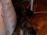 Мой маленький кот 5 лет назад во время ремонта (отжигает)