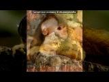 «рыжий» под музыку Поль мориа - В мире животных. Picrolla
